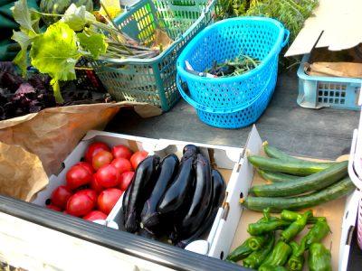 丹波(収穫した野菜)