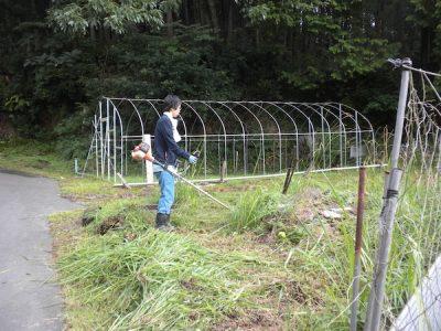 初めての草刈り機、すごい集中力です