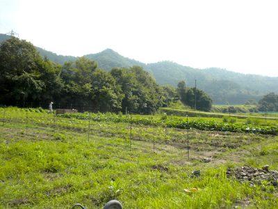 丹波の畑、ありがとう!立派な作物が実りますように