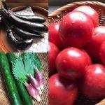 丹波の野菜